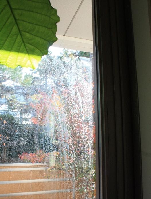 窓前.JPG