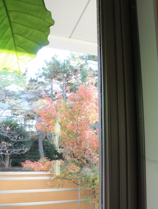 窓後.JPG